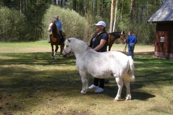 Shetlandi poni